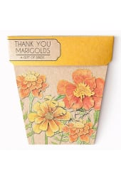 Marigold Seeds - Thank you