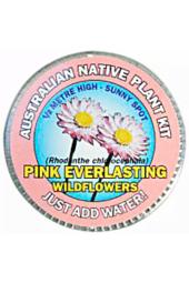 Everlasting Daisy Seed Kit