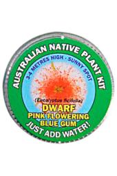 Pink Flowering Gum Seed Kit