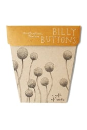 Billy Button Seeds