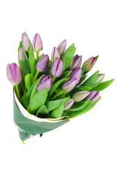 Purple Tulip Bunch