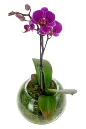 Hot Pink Orchid In Fishbowl