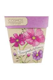 Congratulations Cosmos Seeds