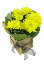 Yellow Delicate Chrysanthemum