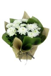 Stay Sweet Large Chrysanthemum