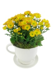 Orange Chrysanthemum Tea Cup
