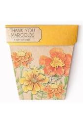 Seeds - Marigold