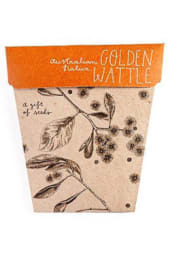 Seeds - Golden Wattle