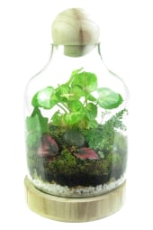 Tropical Forest Terrarium
