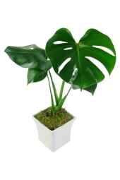 White Ceramic Monstera