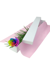 Valentine's Single Rainbow