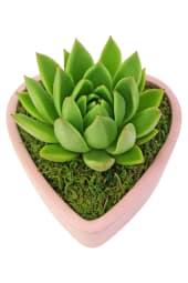 Heart - Succulent