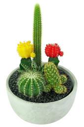 Painted Desert Cactus Garden