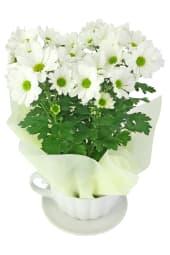 White Chrysanthemum Tea Cup