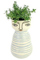 All The Thyme