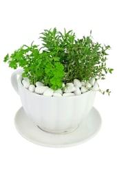 Cup O' Herbs