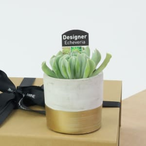 Small succulent in a concrete pot