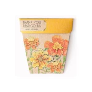 Seeds - Marigold - Standard