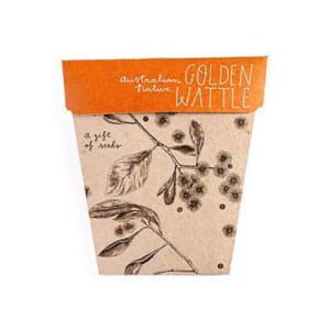 Seeds - Golden Wattle - Standard