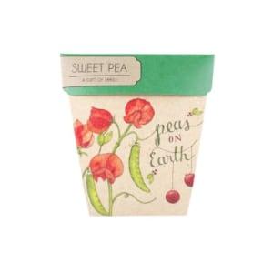 Seeds - Sweet Pea - Standard