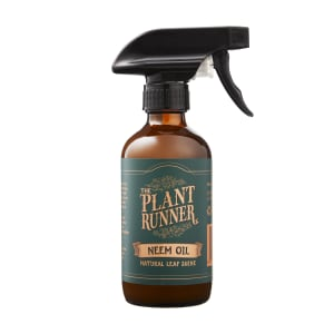 Neem Oil Leaf Shine - Standard