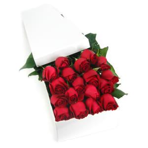 Valentine's 18 Elegant Roses