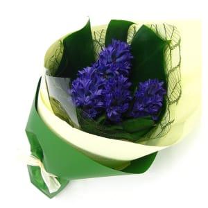 Little Flowers - Hyacinth