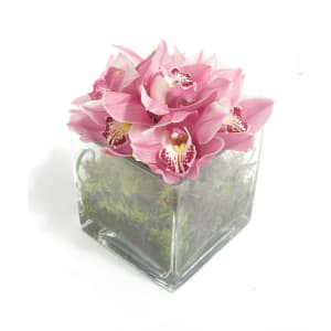 Cymbidium Orchid Vase
