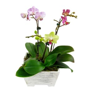 Potted Orchid Planter box