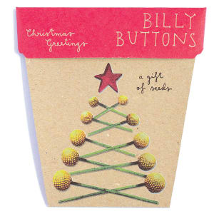 Christmas Billy Button Seeds