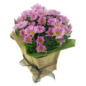 Soft Pink Chrysanthemum