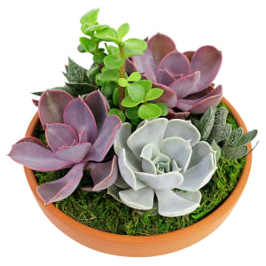 Succulent Garden - Baked Earth