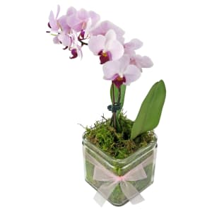 Phalaenopsis Vase - Cube