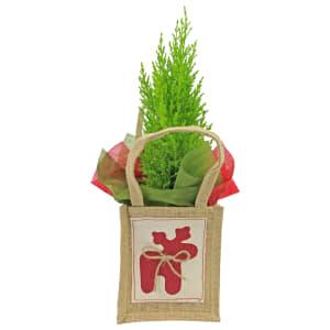 Christmas Conifer