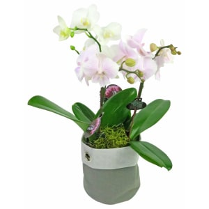 Orchid Planter Sack