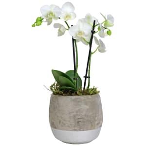 Orchids Two - Concrete Pot