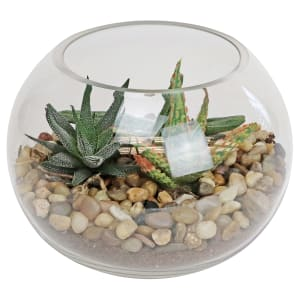 Looking Glass Terrarium