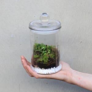 Jar of Pearls Terrarium