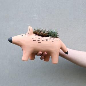Dingo Dearest Succulents