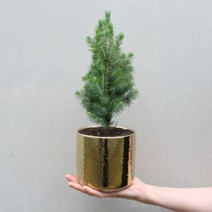 Gilded Christmas Tree