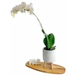 Ribb Cylinder Orchid