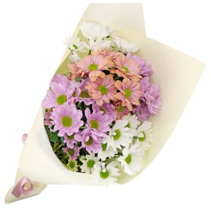Chrysanthemums - Mixed Pastels