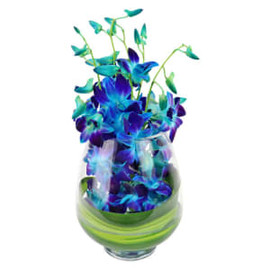 Mday Blue Elegant Orchids