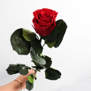 Preserved Red Rose