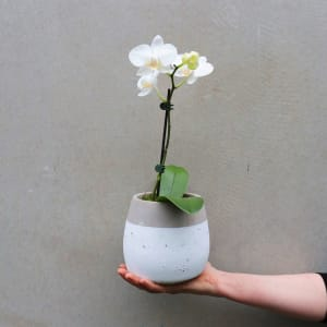Contemporary Orchid - White