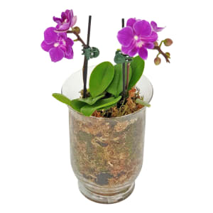Candle Orchid Vase