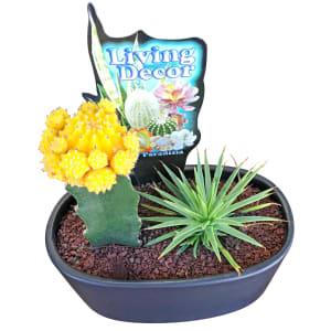 Cacti In Ceramic Pot - Black