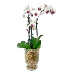 3 Spike Candle Vase
