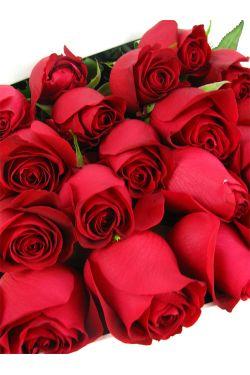 18 Elegant Roses - 18 Roses