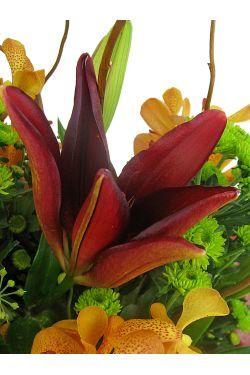 Botanique - Standard